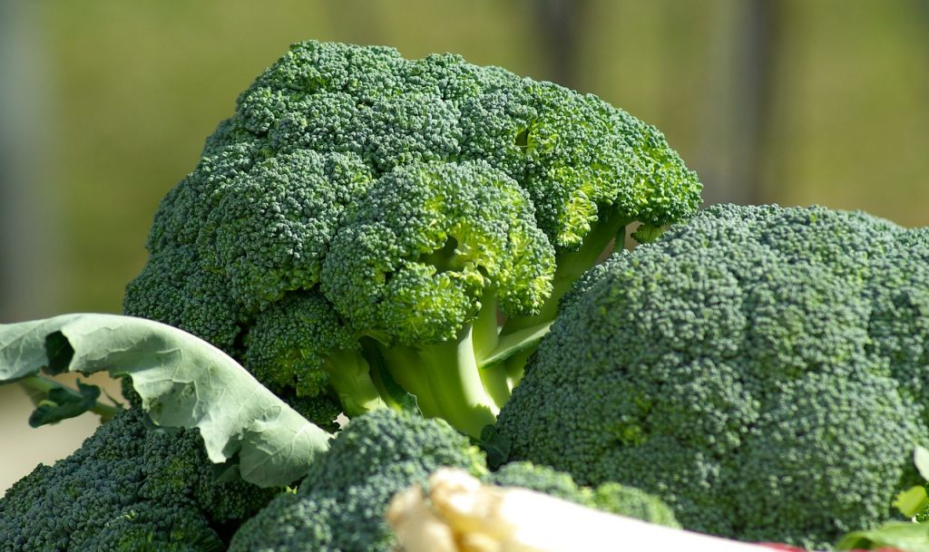 Xanthan gum is extracted from broccoli and vegetables